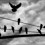Ptica na žici [Tema: Leonard Koen]