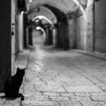 Kapi – Ko uđe, teško izlazi