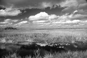 river-of-gras-myrna-bradshaw