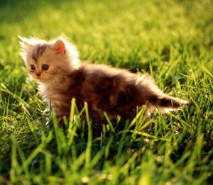 kitty_in_grass_picture