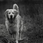 Hleb, pas i dečak [Tema: Raičković]