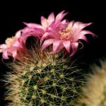 Kaktus koji govori i broji [Tema: Tajni život biljaka]