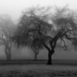 Grožđe na vrbi