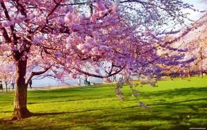 spring-013