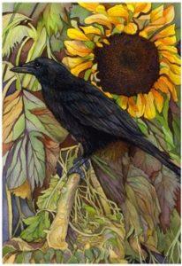 raven-sunflower
