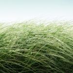 Proljeće dolazi i trava raste sama od sebe [Tema: Zen]