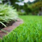 Zelena trava