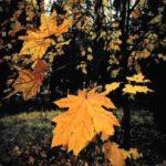 Zvonimir Majdak – Jesen [Tema: Jesen]