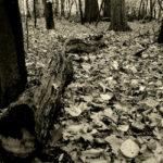 Nikita Stanesku – Jevanđelja jeseni [Tema: Jesen]