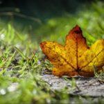 Gistav Flober – Ja volim jesen [Tema: Jesen]
