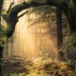 Mary Oliver – Spavajući u šumi [Tema: Antologija svjetske poezije]