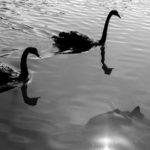 Pol Valeri – Detinjstvo s labudovima [Tema: Antologija svjetske poezije]